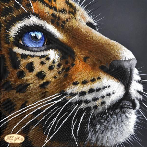 Occhio felino