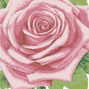Rosa - regina di fiori