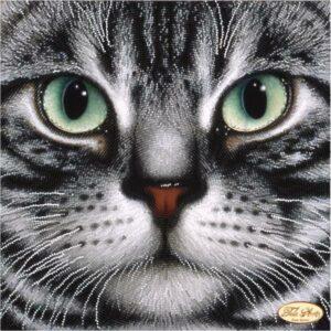 Gatto grigio con occhi verdi